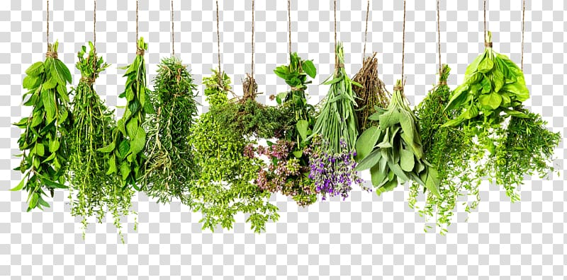 Rosemary thyme and oregano clipart png transparent stock Assorted flower lot, Herb Spice Rosemary Thyme Ingredient ... png transparent stock