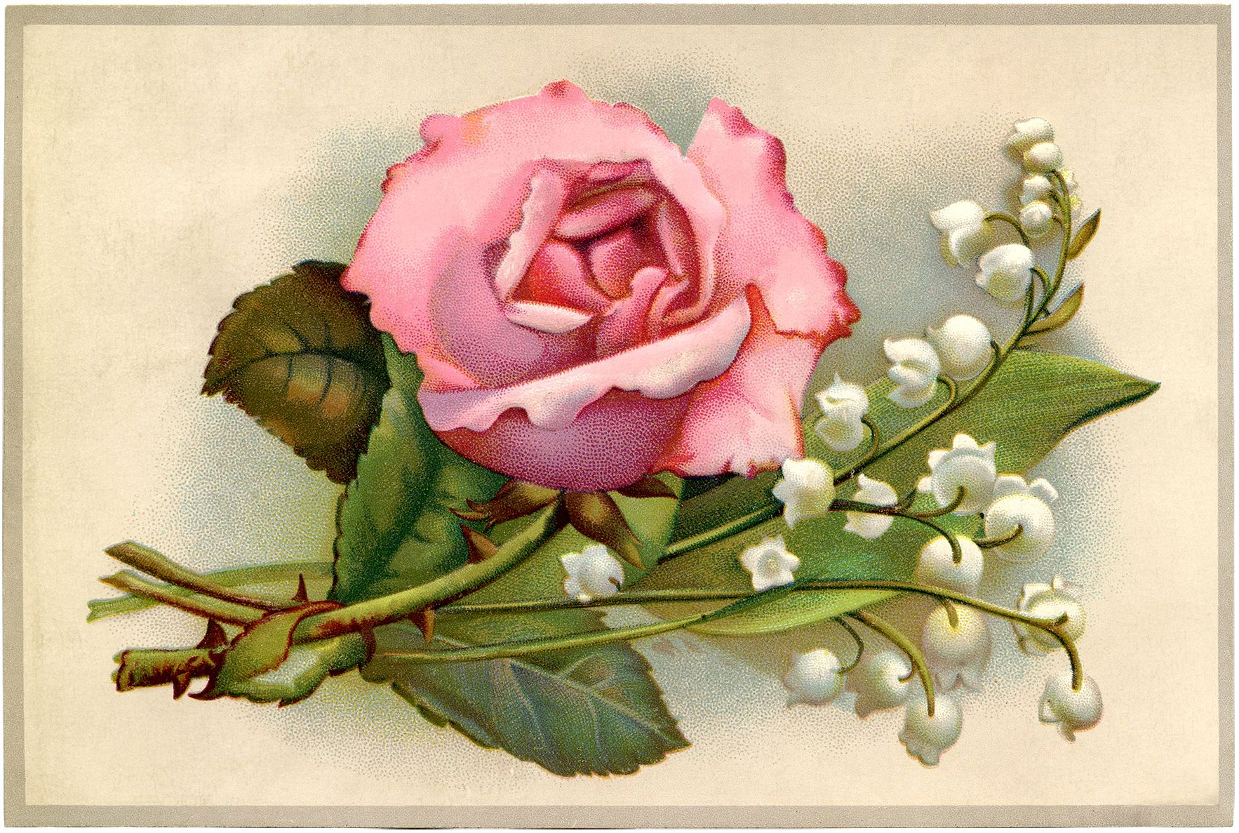 Roses and lilys clipart image freeuse library Vintage Roses and Lily of the Valley Image | flowers ... image freeuse library
