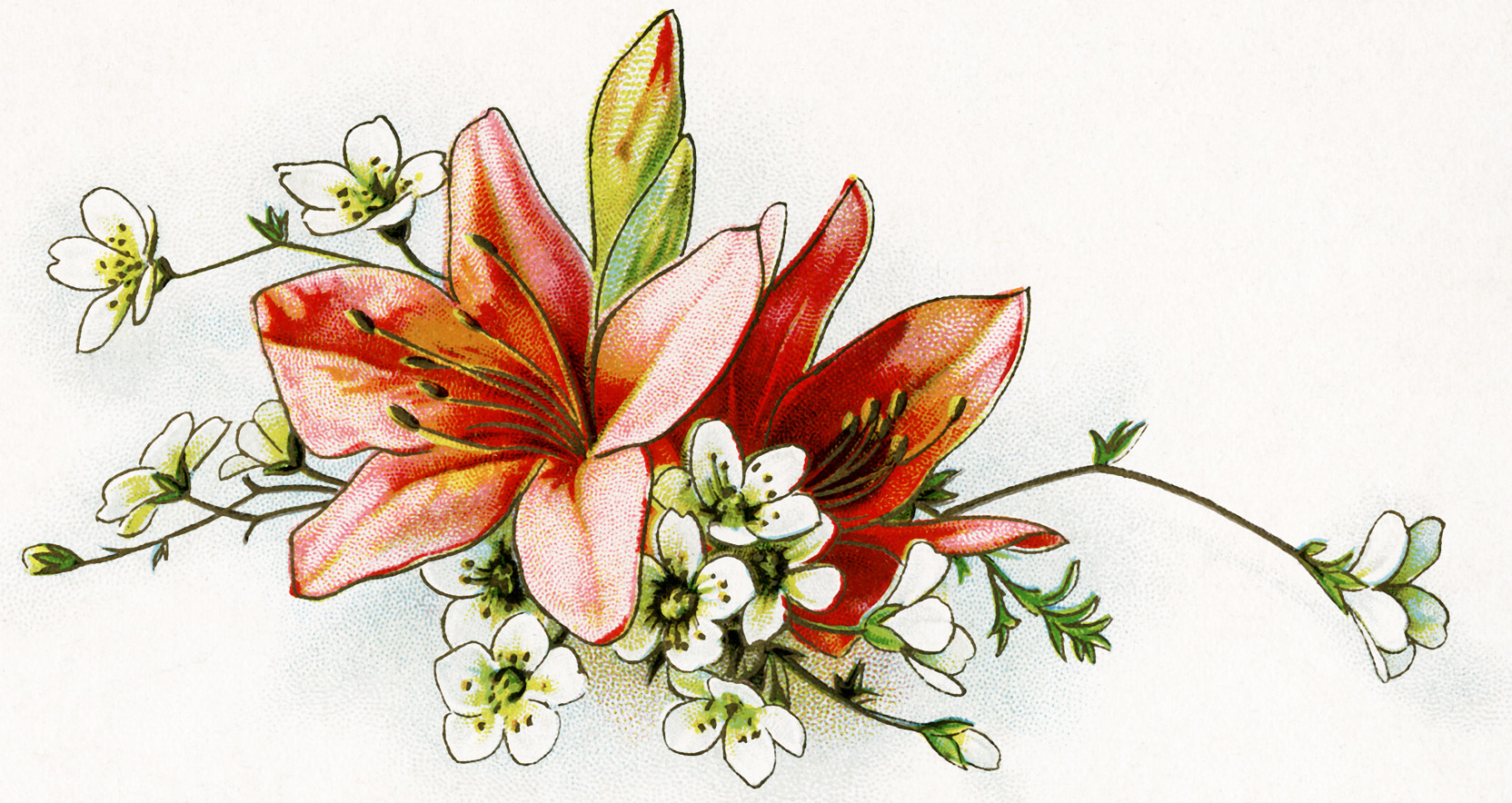Vintage lily clipart clipart library download Free Vintage Floral Image ~ Lilies - Old Design Shop Blog clipart library download