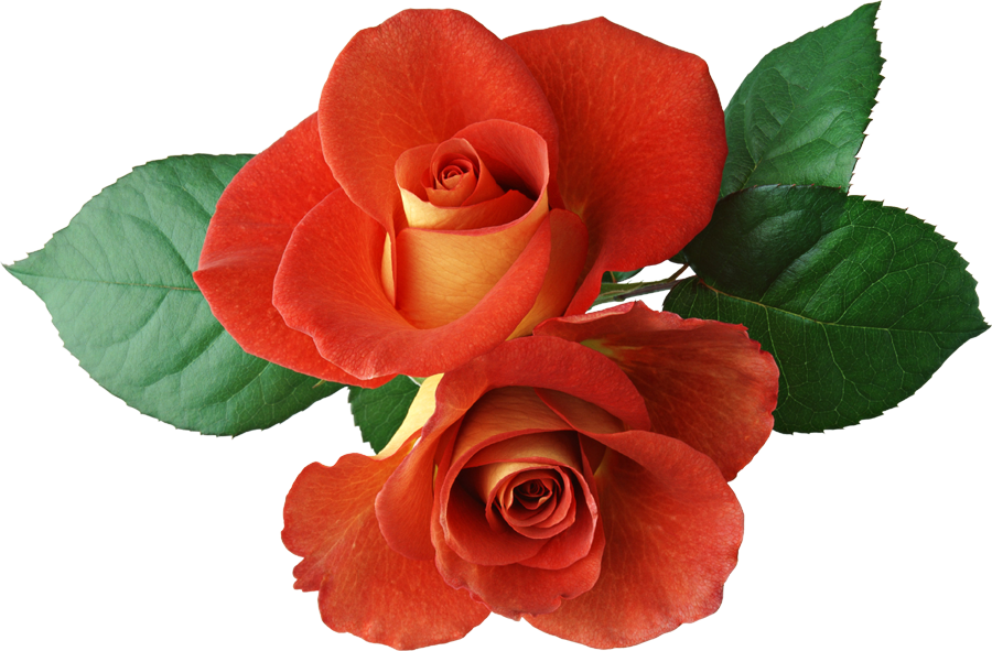 Roses cliparts banner library library Roses Images Free | Free Download Clip Art | Free Clip Art | on ... banner library library