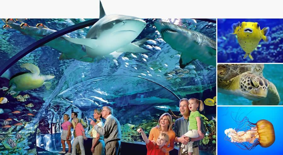 Rotterdam aquarium clipart jpg royalty free stock Ripley\'s Aquariums - Ripley\'s Aquariums jpg royalty free stock