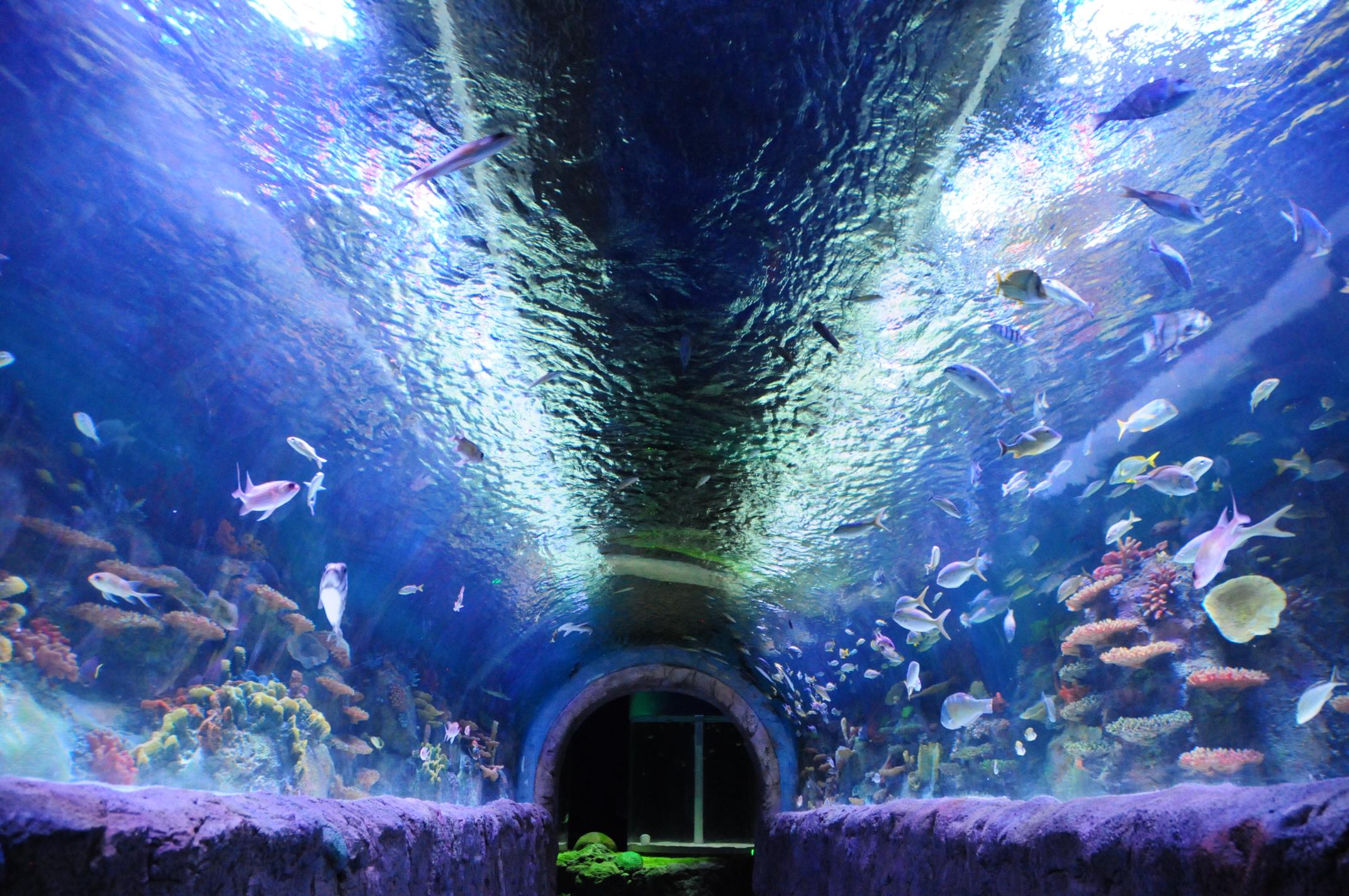 Rotterdam aquarium clipart royalty free stock Rotterdam Mall Hours – Fashion dresses royalty free stock
