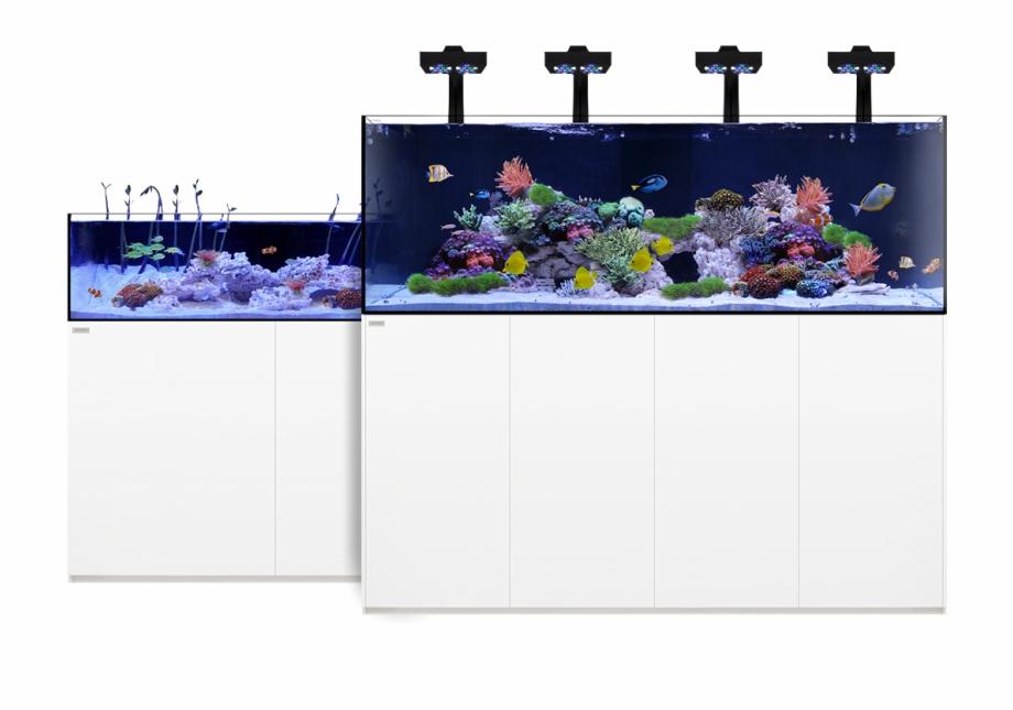 Rotterdam aquarium clipart png free download Waterbox Aquarium Free PNG Images & Clipart Download #947448 ... png free download