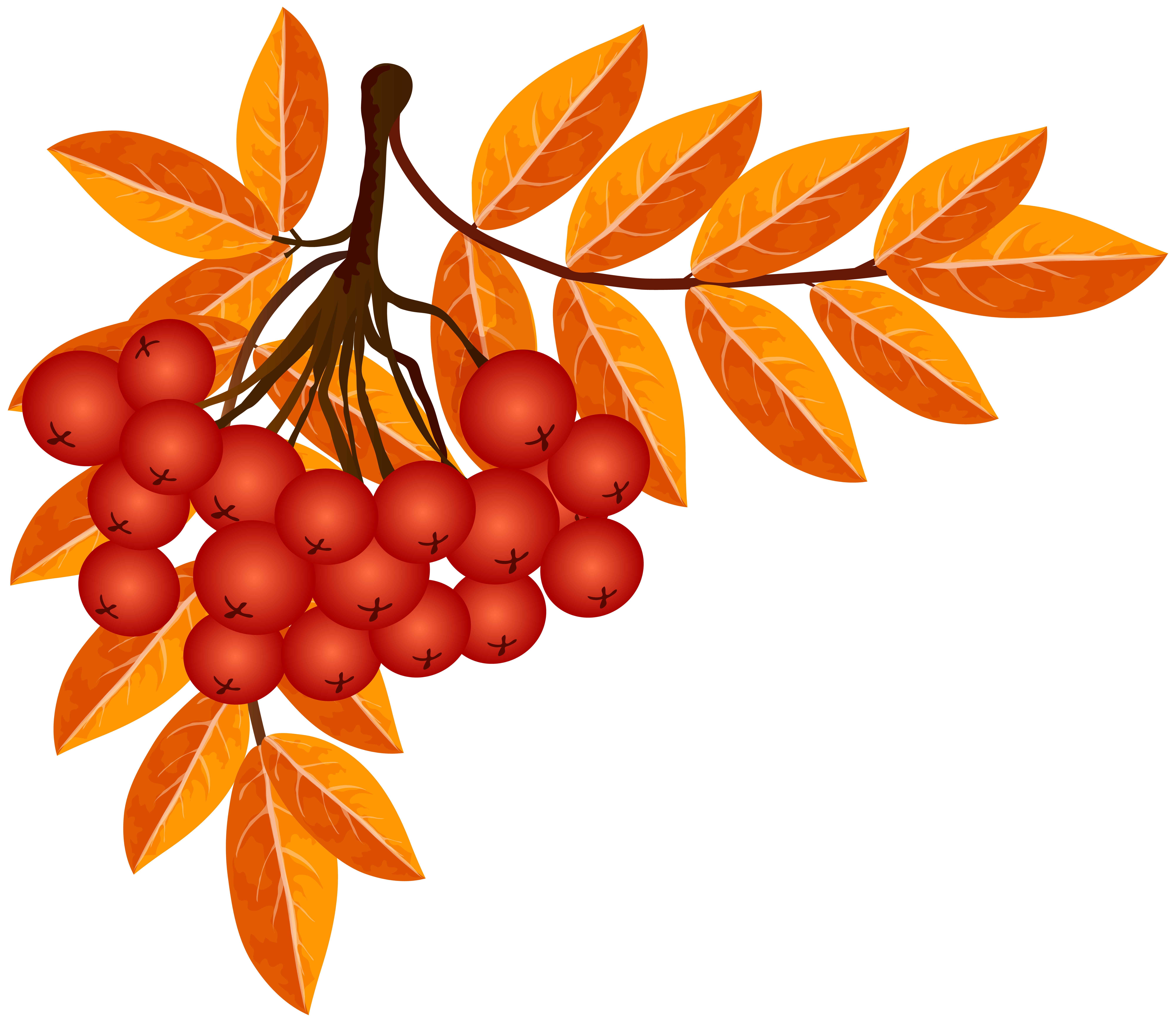 Rowan tree clipart clip library stock Fall Decoration PNG Clip Art Image | Gallery Yopriceville - High ... clip library stock