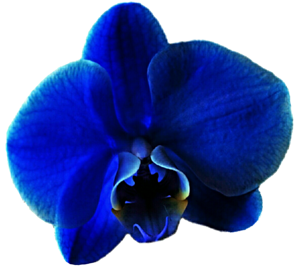 Royal Blue Orchid 2 by jeanicebartzen27 on DeviantArt graphic library download
