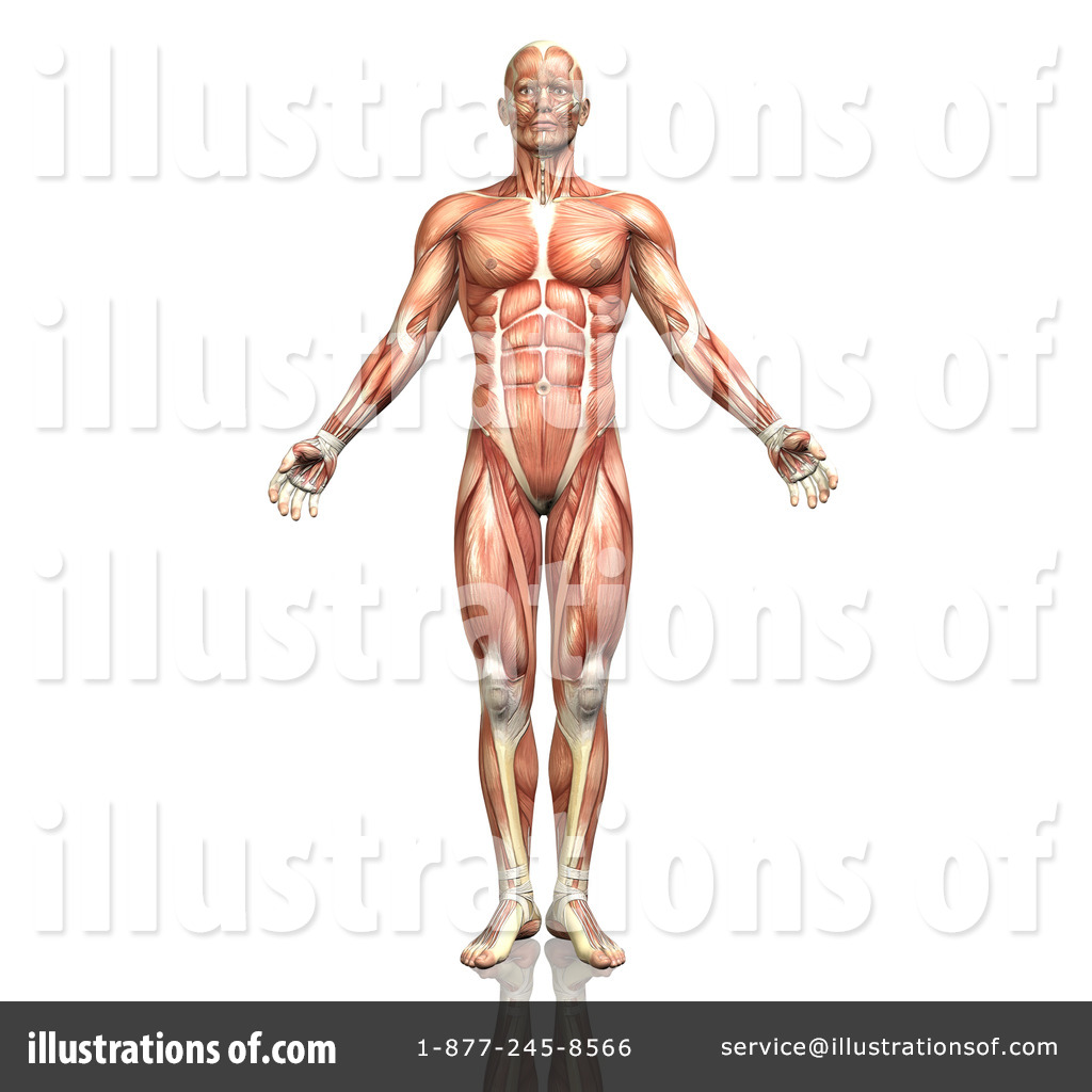 Royalty free human anatomy clipart clip free stock Anatomy Clipart #1300902 - Illustration by KJ Pargeter clip free stock