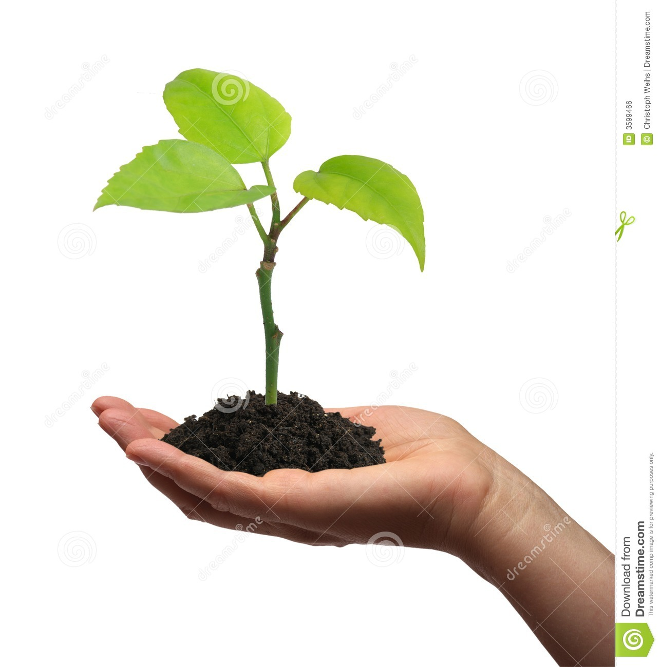 Royalty free plant images jpg black and white stock Royalty free plant images - ClipartFest jpg black and white stock