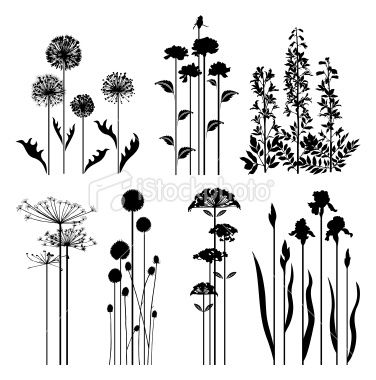 Royalty free plant images picture library library Spring plants collection Royalty Free Stock Vector Art ... picture library library