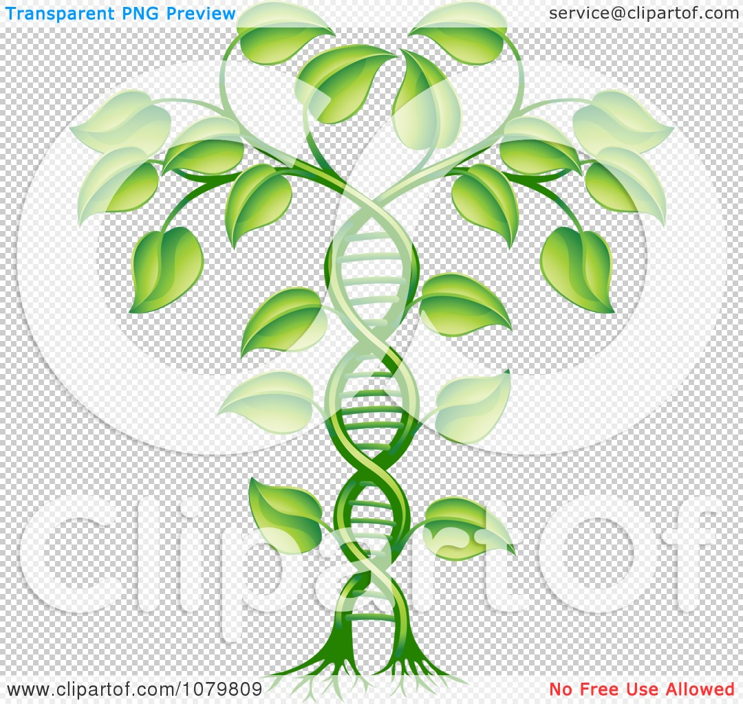Royalty free plant images graphic freeuse stock Clipart 3d Green DNA Crop Gene Modification Helix Plant - Royalty ... graphic freeuse stock