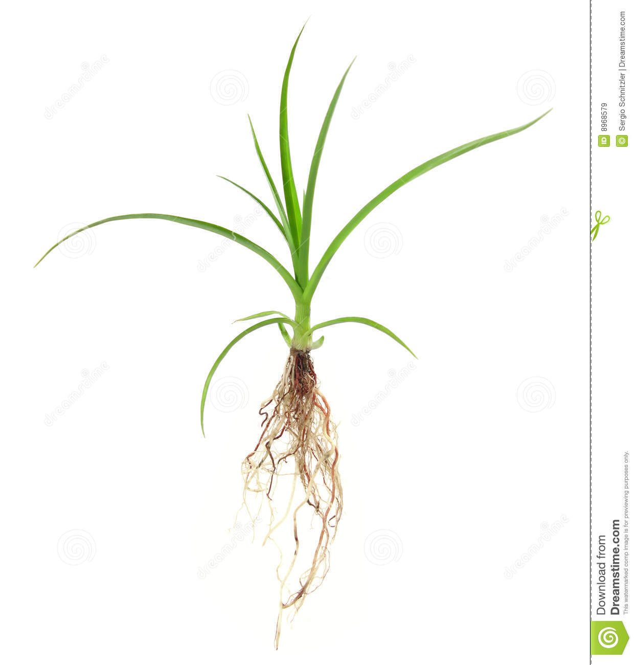 Royalty free plant images clip royalty free download Growing Plant Royalty Free Stock Images - Image: 8968579 clip royalty free download