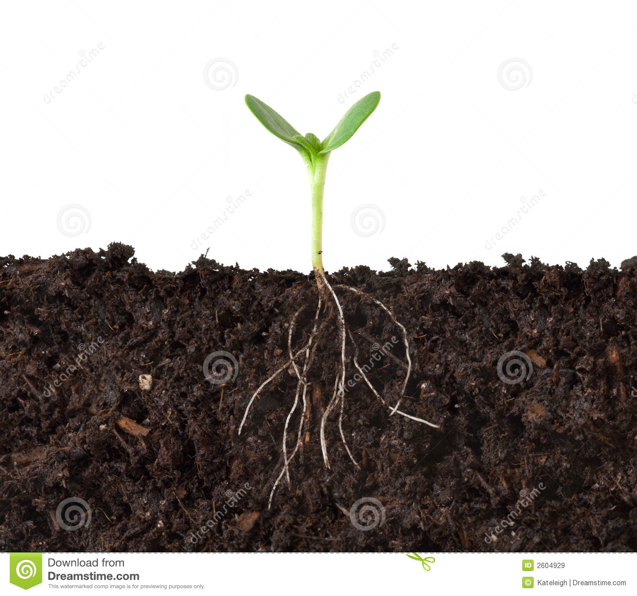 Royalty free plant images picture transparent download Cutaway Of Plant And Roots Royalty Free Stock Images - Image: 2604929 picture transparent download