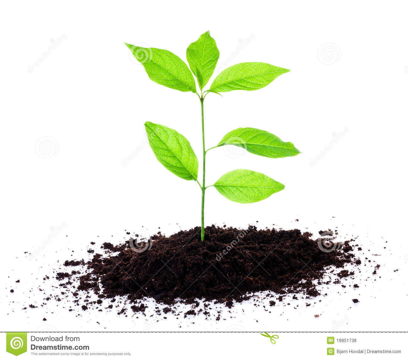 Royalty free plant images vector black and white Royalty free plant images - ClipartFest vector black and white
