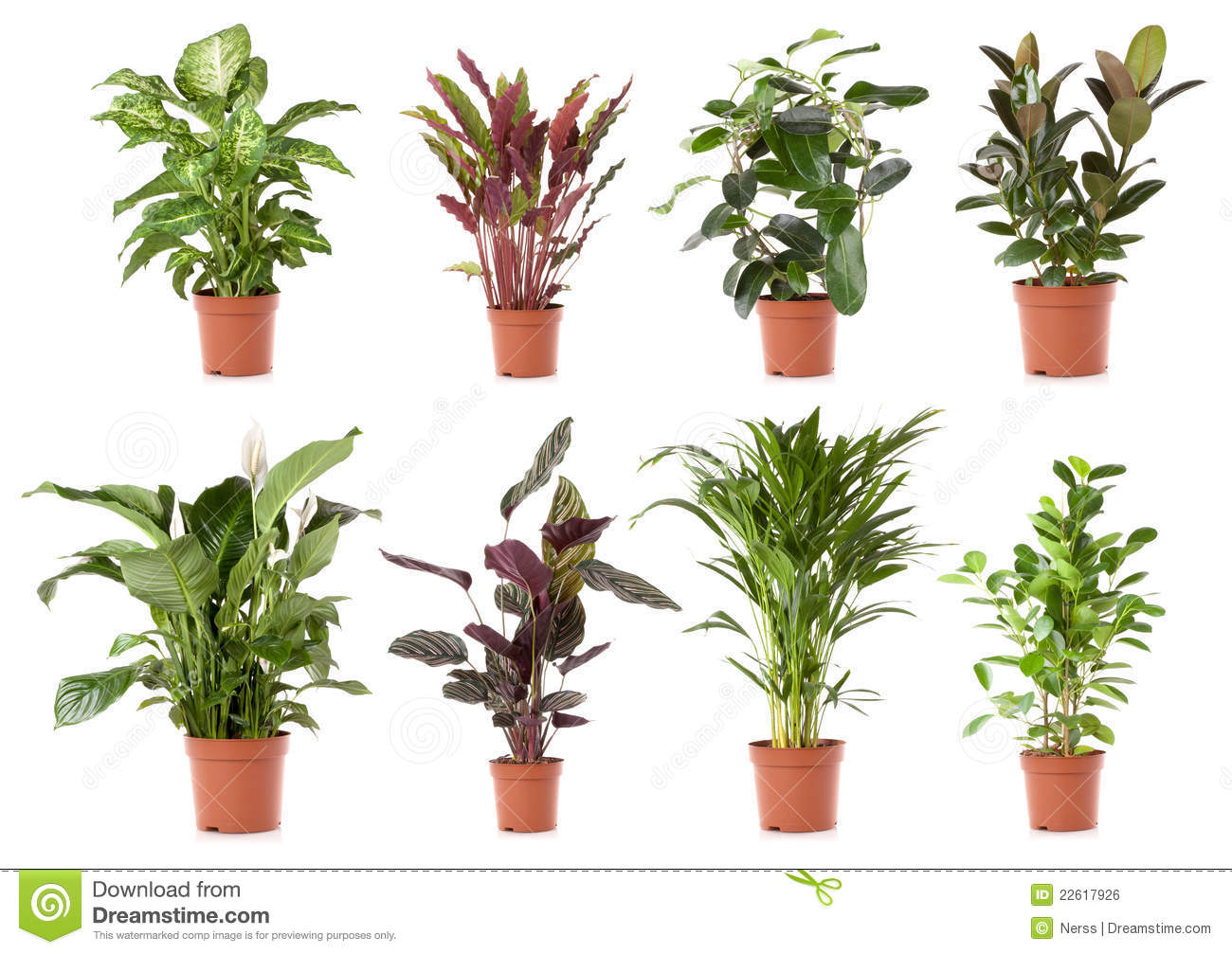 Royalty free plant images image black and white stock Plant Pot Royalty Free Stock Photography - Image: 15962987 image black and white stock