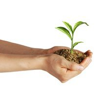 Royalty free plant images image Royalty Free Plant and Flower Images - Media set 2286 - 48 per ... image