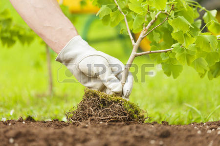 Royalty free plant images picture black and white stock Plant Stock Photos Images. Royalty Free Plant Images And Pictures picture black and white stock