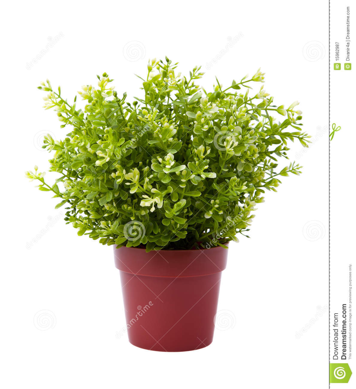 Royalty free plant images png library library Plant Pot Royalty Free Stock Photography - Image: 15962987 png library library