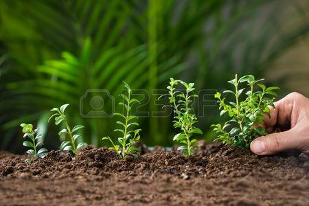 Royalty free plant images picture royalty free Plants Stock Photos & Pictures. Royalty Free Plants Images And ... picture royalty free