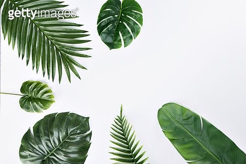 Rubio plantation clipart svg library download 탑앵글, 여름, 계절, 오브젝트 (묘사), 잎 (식물부분), 사람없음 ... svg library download
