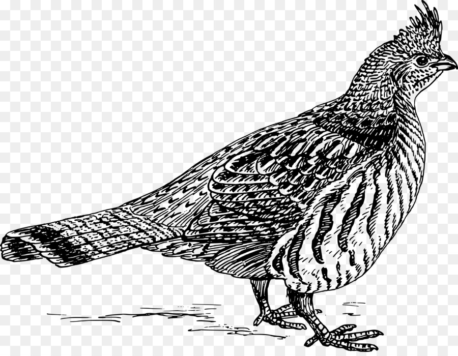 Ruffed grouse clipart clipart library Chicken Cartoon clipart - Bird, Chicken, Feather ... clipart library