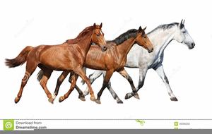 Running horses clipart clip art royalty free Herd Of Running Horses Clipart | Free Images at Clker.com ... clip art royalty free