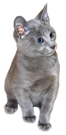 Russian blue cat clipart svg royalty free stock Russian blue kitten clipart | Clipart | Gato azul ruso ... svg royalty free stock