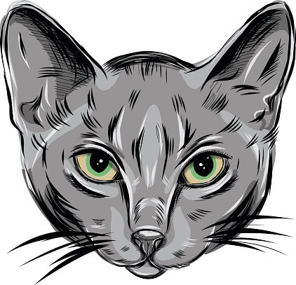 Russian blue cat clipart graphic black and white library Vector Portrait of Domestic Russian Blue Cute Young Kitty ... graphic black and white library