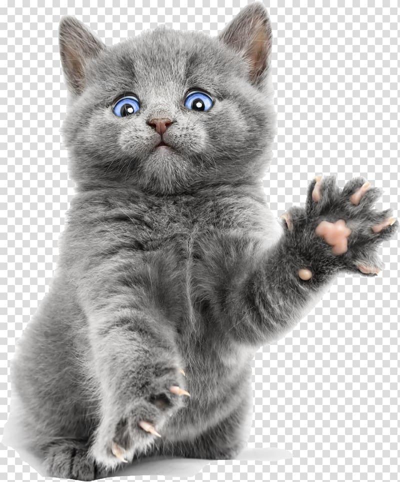 Russian blue cat clipart clip art library download Russian blue kitten screenshot, Burmese cat Russian Blue ... clip art library download