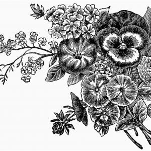 Rustic flower clipart black and white clipart library Flower: Simple Black And White Flower Vector, Rustic Flower ... clipart library
