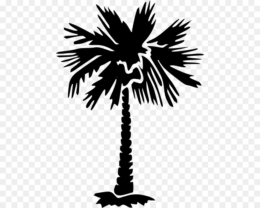 Sabal palm clipart