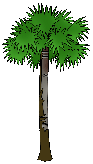 Sabal palm clipart picture freeuse download United States Clip Art by Phillip Martin, Florida State Tree ... picture freeuse download