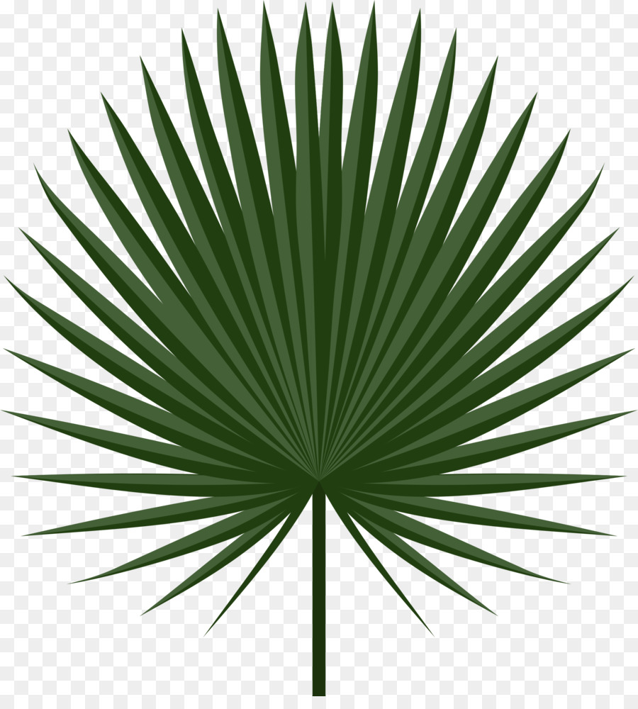 Sabal palm clipart vector royalty free download Palm Tree Leaf clipart - Leaf, Green, Plant, transparent ... vector royalty free download