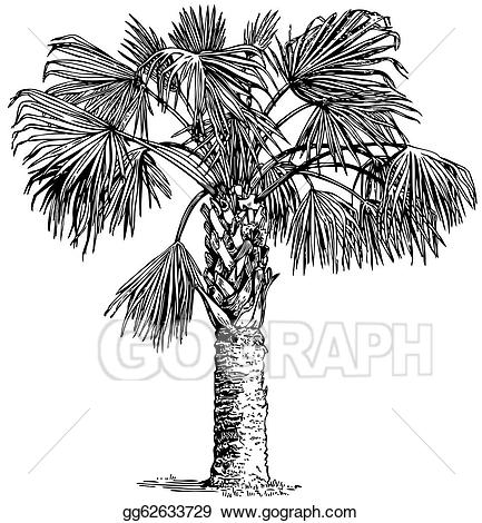 Sabal palm clipart image library library Clip Art Vector - Plant sabal palmetto . Stock EPS ... image library library