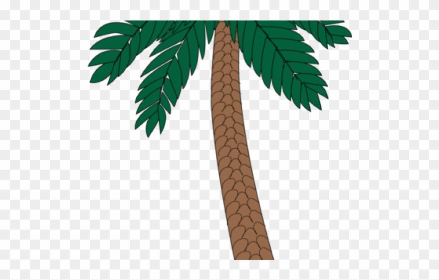 Sabal palm clipart clip art black and white stock Date Palm Clipart Sabal Palm - Png Download (#3172030 ... clip art black and white stock
