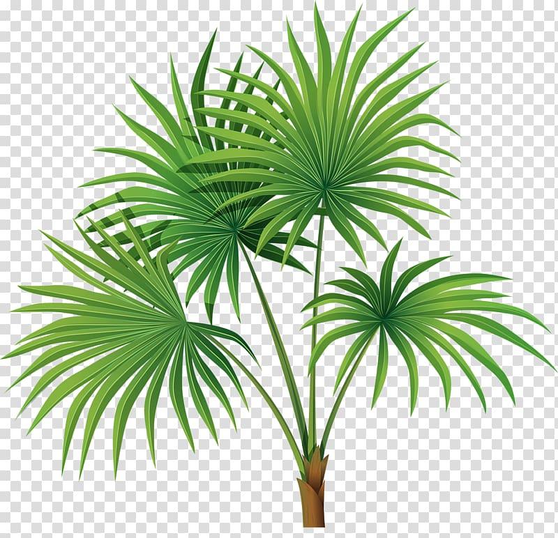 Sabal palm clipart svg free Arecaceae Tree Sabal Palm Leaf , Hand-painted palm leaves ... svg free