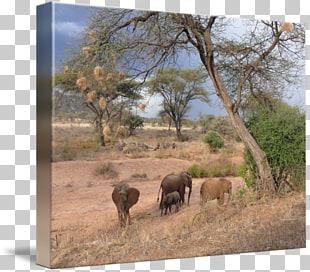 Safari dirt road clipart picture library download Free Dirt Road Clipart mount kilimanjaro, Download Free Clip ... picture library download
