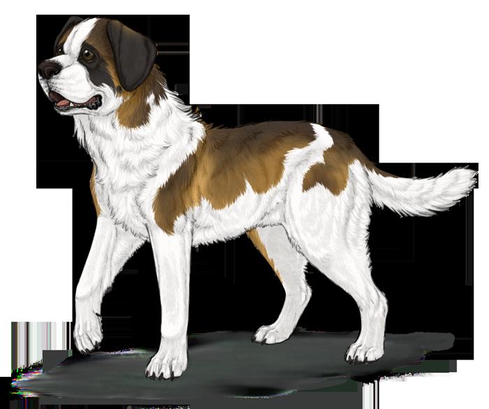 Saint bernard dog clipart png transparent download 28+ Collection of Saint Bernard Drawing | High quality, free ... png transparent download