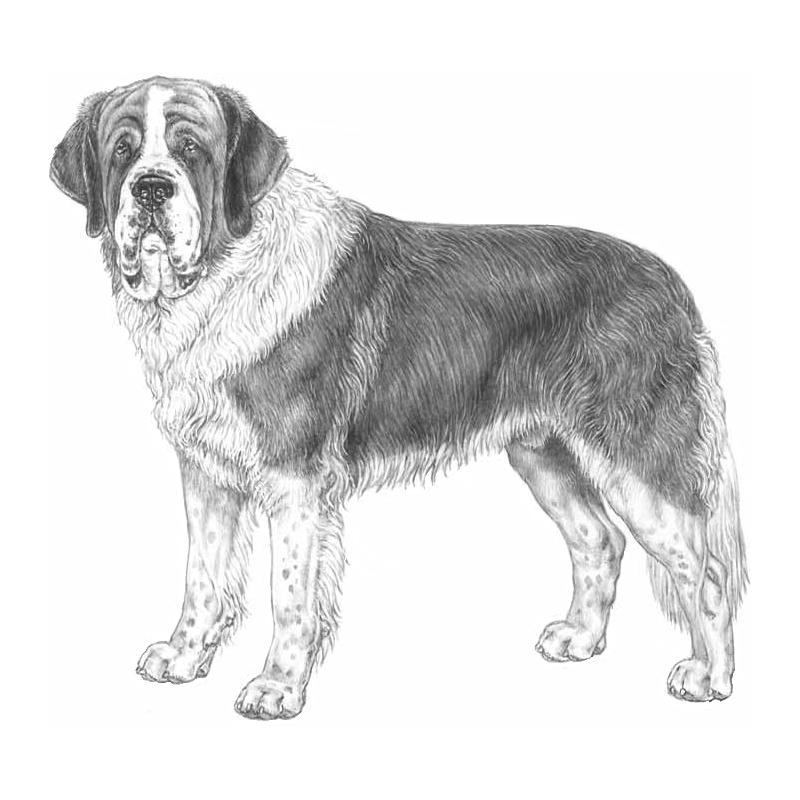 Saint bernard dog clipart clip transparent IPFD Harmonization of Genetic Testing for Dogs: Press Release - IPFD ... clip transparent