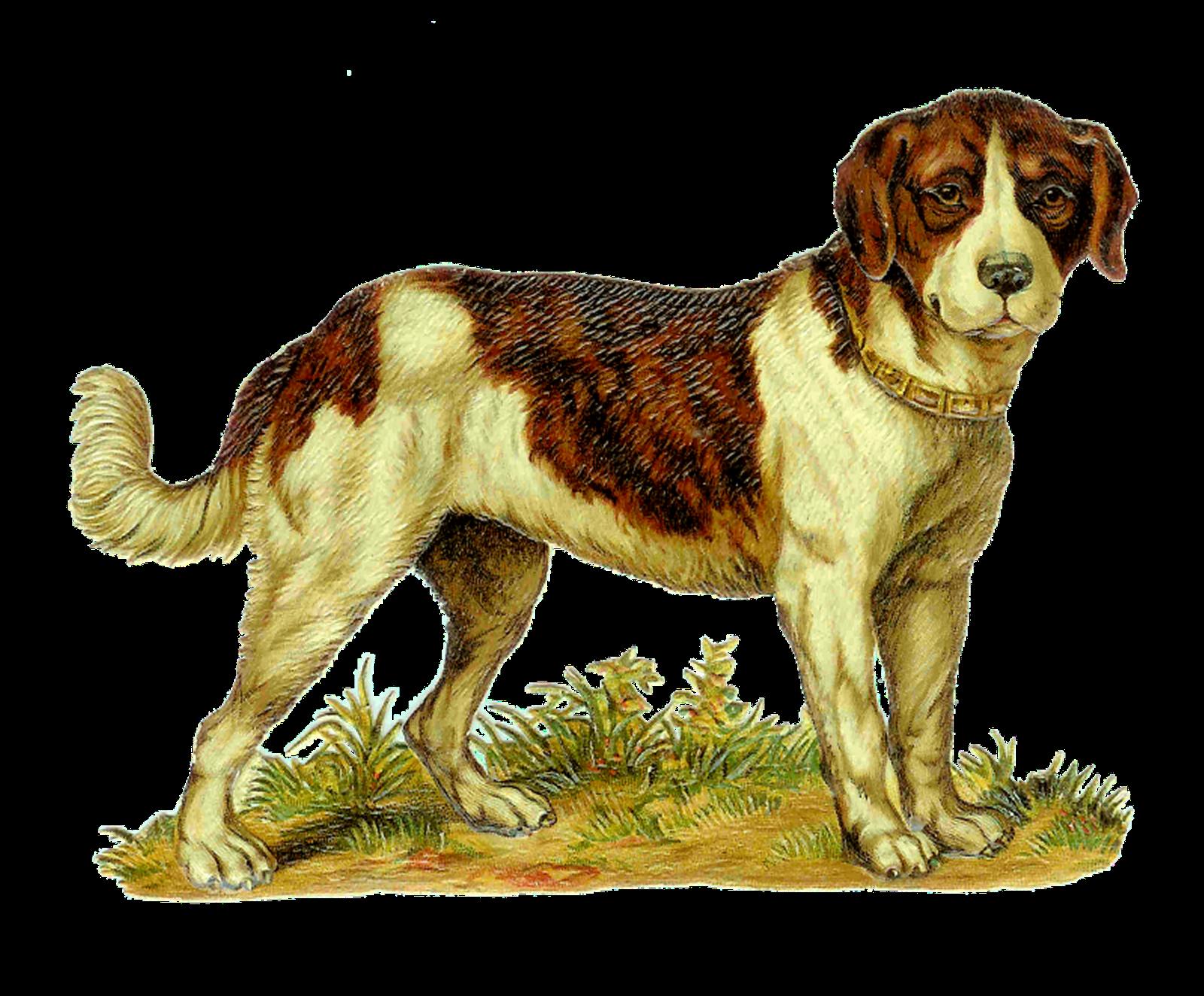 Saint bernard dog clipart jpg free Antique Images: Vintage Dog Clip Art: Victorian Die Cut of St ... jpg free