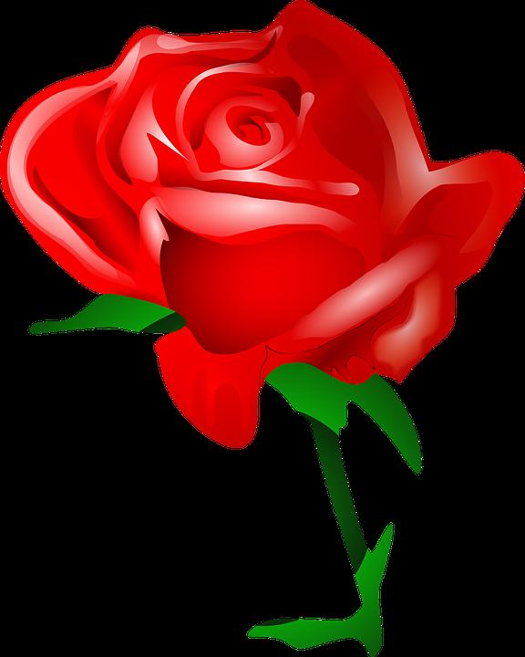 Sak clipart banner transparent Free Image on Pixabay - Rose, Flower, Love, Romantic | SAK ... banner transparent