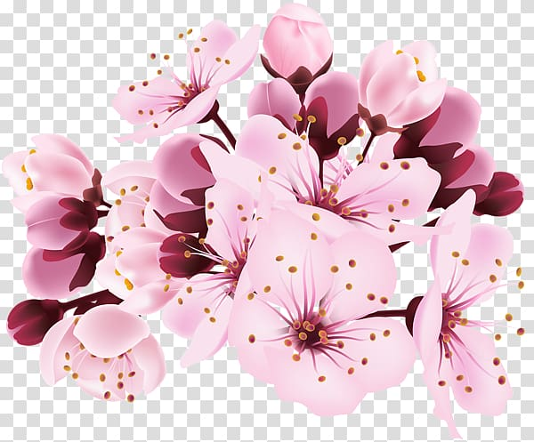 Sakura branch clipart jpg stock Cherry blossom , Sakura branch transparent background PNG ... jpg stock