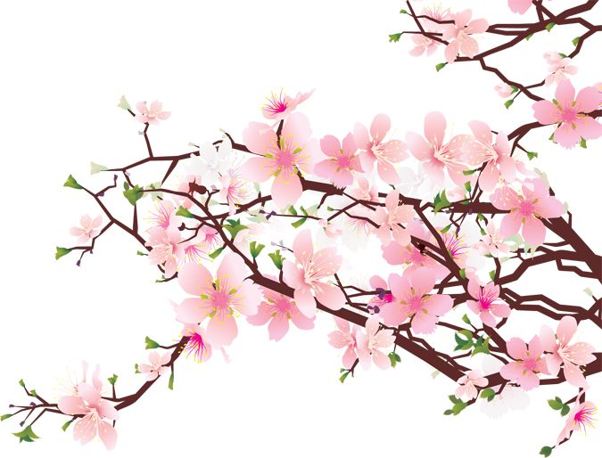Sakura flower clipart png banner transparent download Sakura flower clipart png - ClipartFest banner transparent download