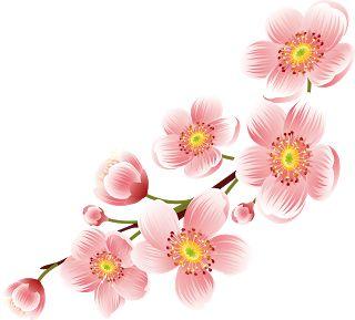 Sakura flower clipart png banner freeuse download CHERRY BLOSSOM , CHERRY BLOSSOM .PNG , CHERRY BLOSSOM ART ... banner freeuse download