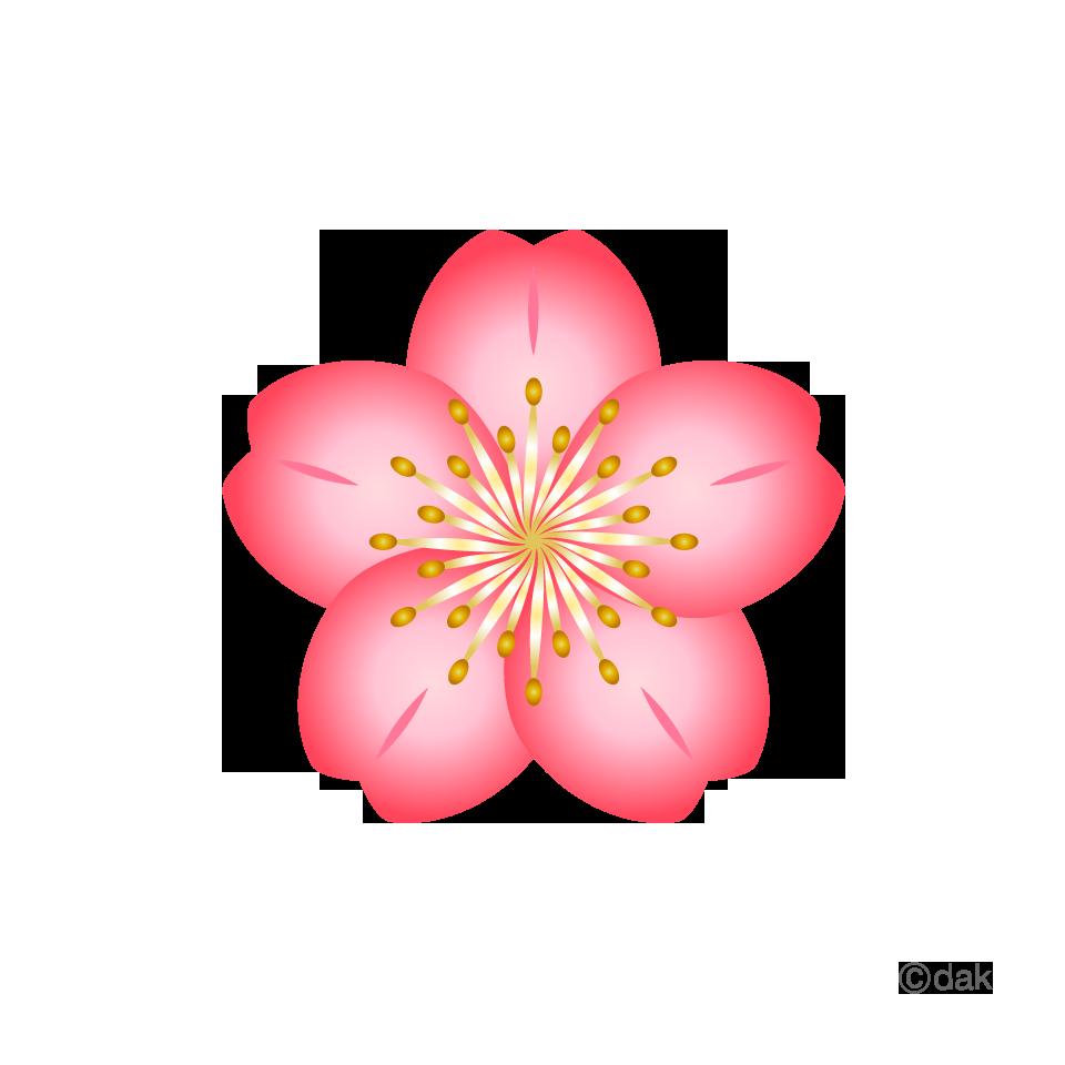 Sakura flower clipart png banner library Sakura flower clipart png - ClipartFest banner library