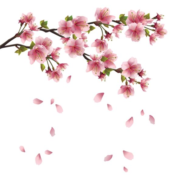Sakura flower clipart png graphic library 17 Best images about Cherry blossom vector clipart png. on ... graphic library