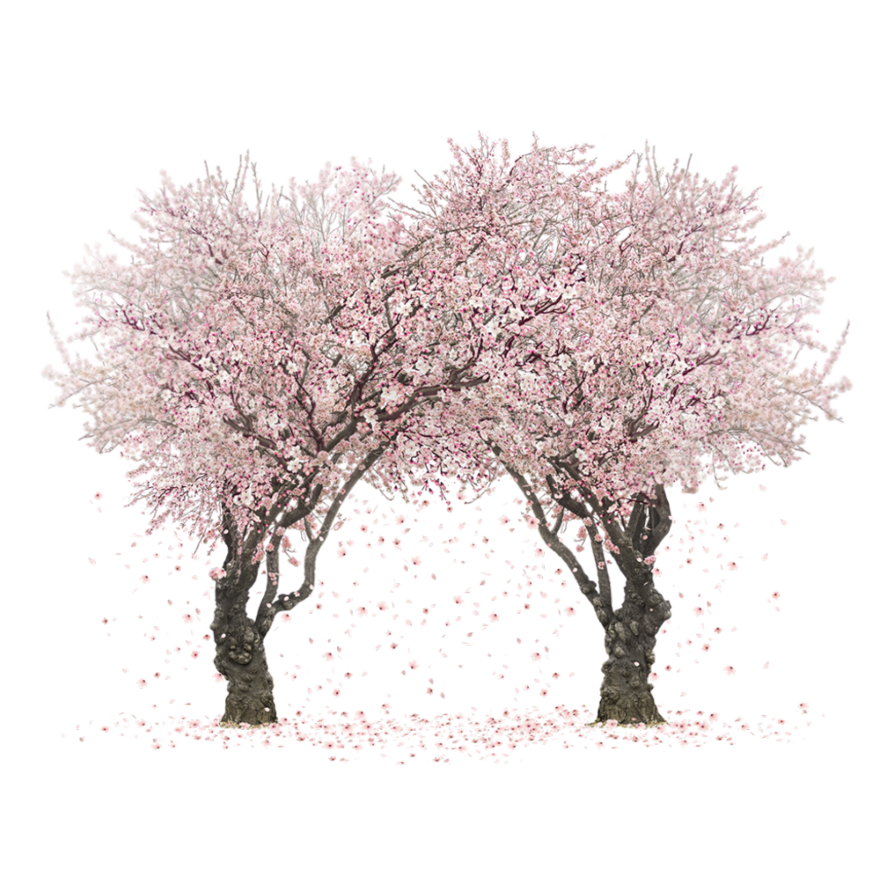 Sakura Trees by Rosemoji on DeviantArt banner freeuse
