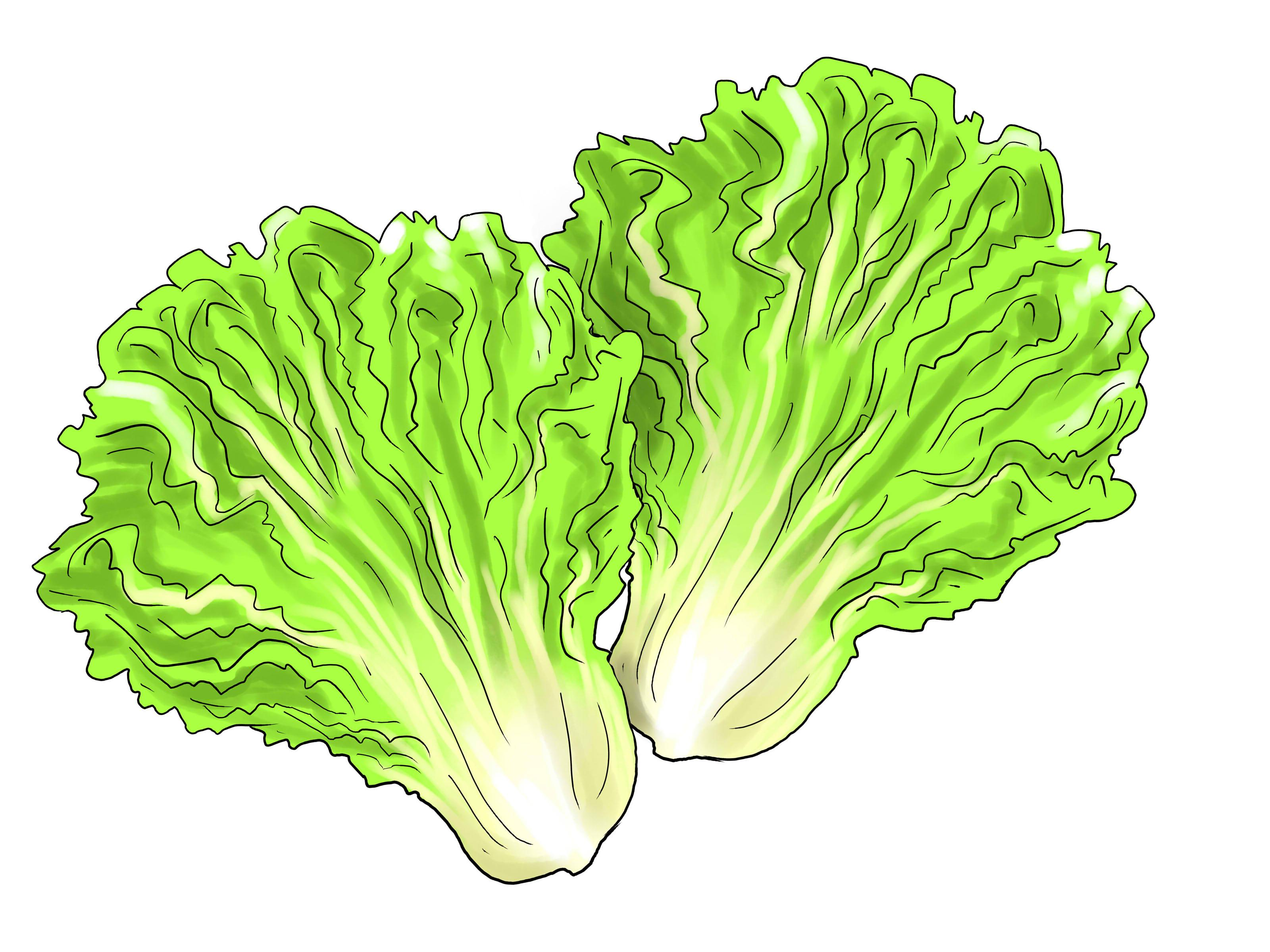 Salad leaf clipart clip Hd lettuce leaf clipart cdr - Clip Art Library clip