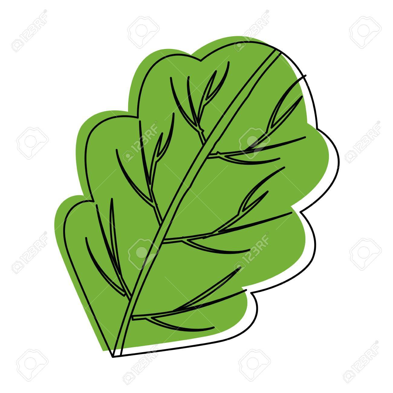 Salad leaf clipart clipart black and white download Lettuce Leaf Drawing | Free download best Lettuce Leaf ... clipart black and white download