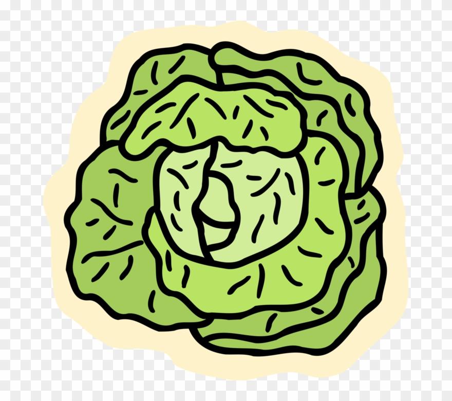 Salat clipart jpg transparent download Cabbage Vector Leaf - Salat Clipart - Png Download (#3189123 ... jpg transparent download