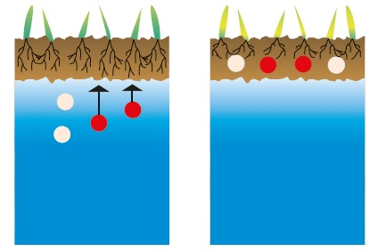 Salinization clipart graphic library Humintech GmbH: What are Humic Acids? graphic library
