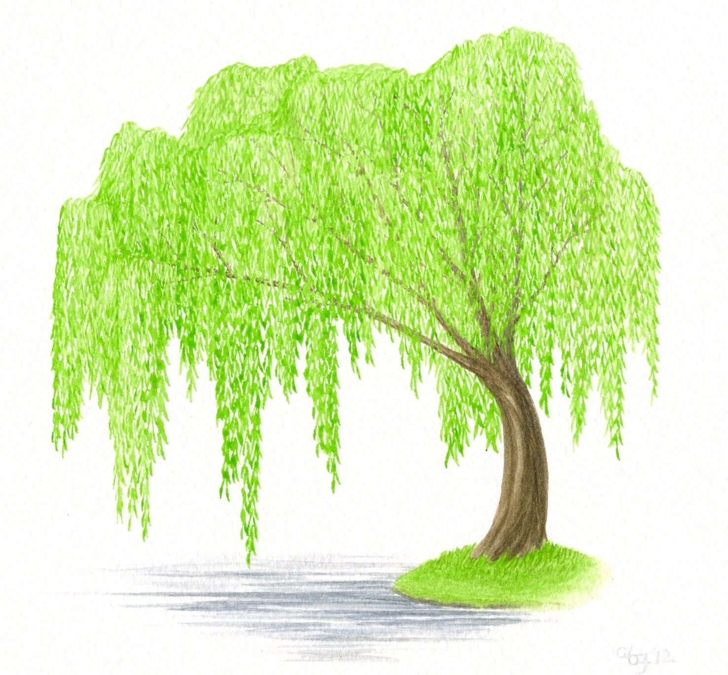 Salix clipart image free library Free Willow Leaf Cliparts, Download Free Clip Art, Free Clip ... image free library